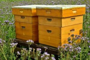 Become a Hobby Beekeeper- Help the Environment- Make Pure Honey