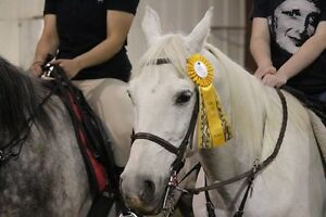 Ride Horses Learn Horsemanship DAY CAMPS ALL SUMMER