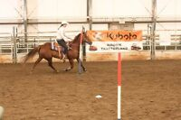 14yr Old QH Mare For Sale