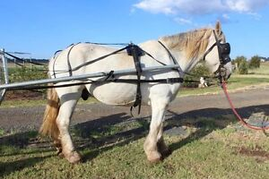 Harness gear for big horse (full set-up) Kingsthorpe Toowoomba Surrounds Preview