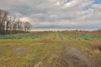 Opportunity to Own 10 Acres of Land in Niagara's Wine Country!