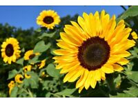 Flower Power Gardening - Edinburgh, Mid and East Lothian - space for new regular clients available