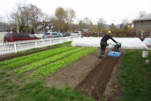 Wanted: Front/Back Lawns to Rent or trade with Organic Produce!