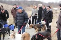 Effective Dog Training: Group classes & private in-home training