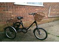 Pashley Picador Adult Tricycle