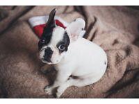 Custom dog decorations - Add Any name.