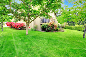 Yard Maintenance and Cleaning