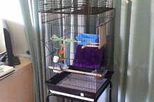 Green Cheek Conure + Cage and Play Gym for sale Dutton Park Brisbane South West Preview