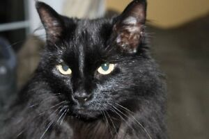 Phoebe - missing from the central Nanaimo- Latimer Rd area