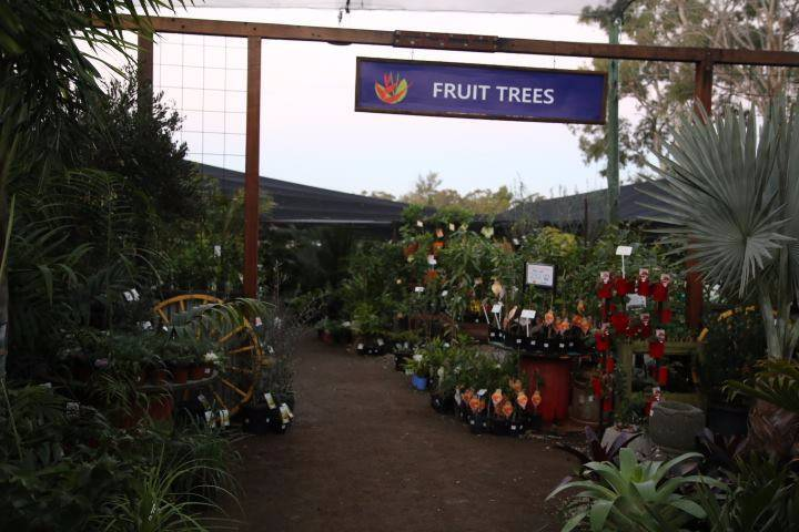 AVOCADO TREES * HASS GWEN | Plants | Gumtree Australia