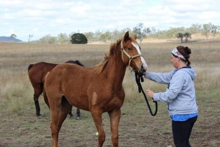 Stunning yearling TB filly. Well bred Kilkivan Gympie Area Preview