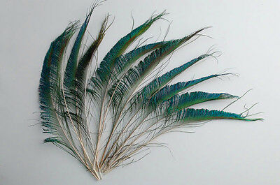 25 Pcs PEACOCK SWORDS Natural Feathers 10-14