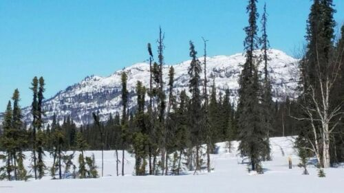 Alaska Land - 5 acres - Onestone Lake - Iditarod Trail Access