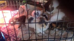 5 kittens to good homes only! Greta Cessnock Area Preview