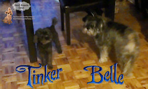 *FULL XMAS & NYE* CAGE FREE FUN SITTING FOR SMALL DOGS West Island Greater Montréal image 3