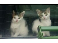 TWO BLACK AND WHITE CATS WHO NEED A NEW HOME