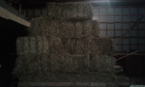 Horse hay 61 bales. first cut 2017.$4,50