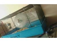 Hamster and cage free