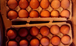 Free Range Eggs - Coming to Montague Make Bake or Grow