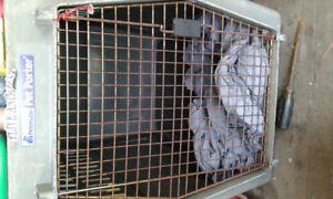 LARGE DOG CRATE FOR SALE.