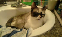 Female Cat to Give away to a good home