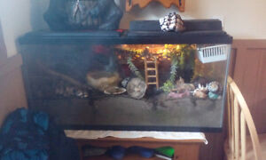 Hermit crabs and tank.
