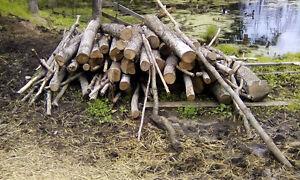 MAPLE....$100.....firewood