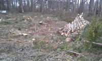 Land clearing service for the firewood.