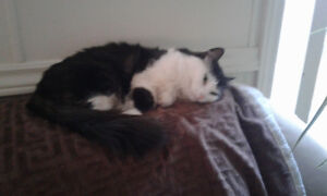 Free adult femail kitty cat to a good loving person or family!