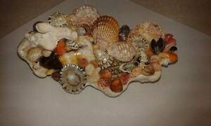 DECORATIVE SHELL ART Duncraig Joondalup Area Preview