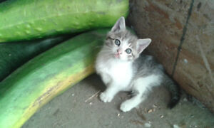 One Adorable Kitten Available!