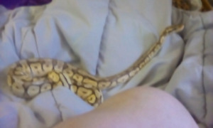 Loking for snake\s to a good home!