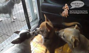 *FULL* MONTREALDOGSOLUTIONS.COM-Cage free boarding small K9's West Island Greater Montréal image 7