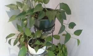 Lush House Plants