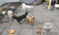 Boarding in family home for small dogs only since 2010!