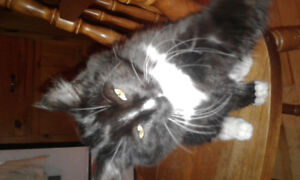 Free female kitten approx 3 and a 1/2 months old