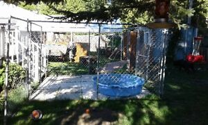 Out Door Dog Kennel