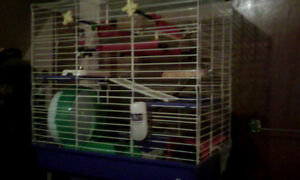 Looking for rat cage. Peterborough Peterborough Area image 1