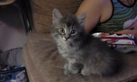Small little kittens looking for good home