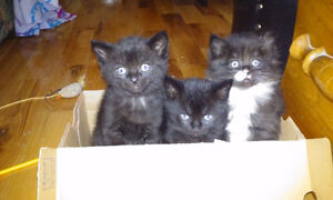 Chatons mignons