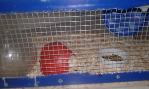 Hamster plus cage/bin with accessories