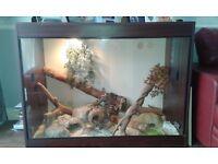 Snake and full Vivarium set up