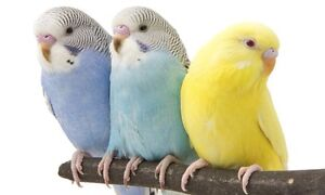 I want free  budgies bird Gosnells Gosnells Area Preview