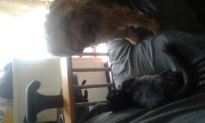 Recherche appartememt accepte chien est chat calme