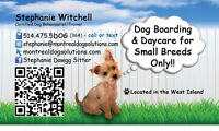 MONTREALDOGSOLUTIONS.COM-Cage free home boarding for small dogs