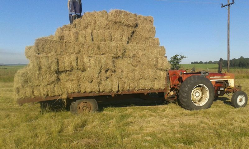 Hay bales for function decor.