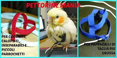 pettorina per pappagalli - un nuovo modo di volare