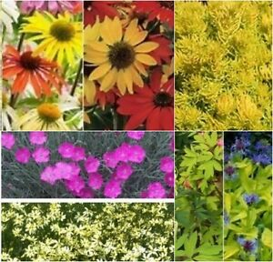 PLANTS FOR SALE - $ 1.00 & up,   Over 500 Varieties Plants are