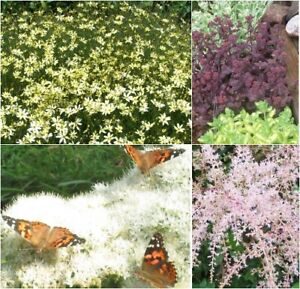 ALL PLANTS on SALE- EVERYTHING MUST GO -30-80% Off  Offers Accep