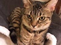 Missing 8 month old cat East Kilbride